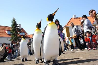 ペンギンパレード 毎日開催中!!