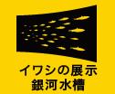イワシの展示銀河水槽