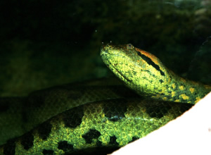 爬虫類と両生類の迫力がスゴ過ぎる!
