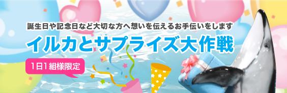 dolphin-surprise